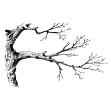 Tree Branch. Hand Drawn Sketch Style Vector Illustration Of Tree Branch Without Leaves. Isolated On Transparent Background.