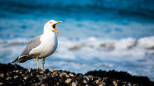 The Song Of The Seagull