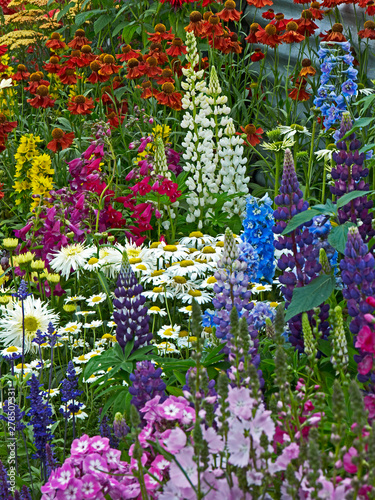 A colourful flower border with Lysimachia, coreopsis, phlox and Leucanthemums