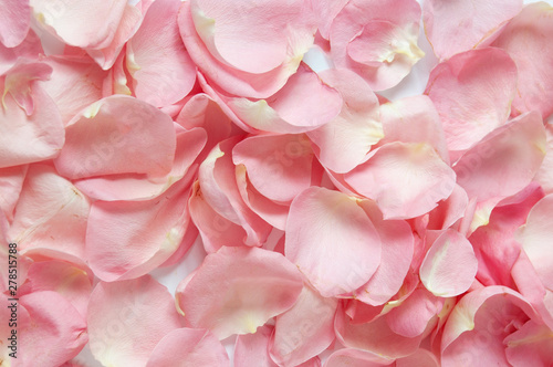 Fototapeta Beautiful pink rose petals background, closeup obraz na płótnie