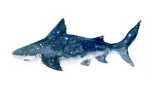 Watercolor Shark.Dreams Illust...