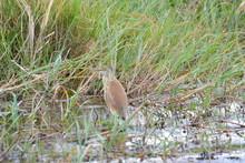 BOTSUANA(Safari, Rio Zambeze,animales)