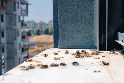 Photo  Pigeon droppings on the windowsill