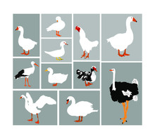 Birds Collection Vector Illust...