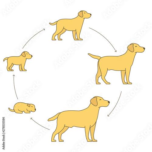 Obraz na płótnie Round stages of dog growth set
