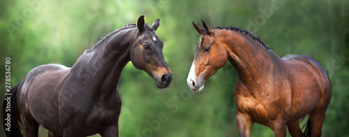 Foto auf AluDibond Pferde Two Horse close up portrait in motion against green background