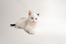 The Beautiful Cat Lies, Is At Attention, Licks Its Nose, On A White Background