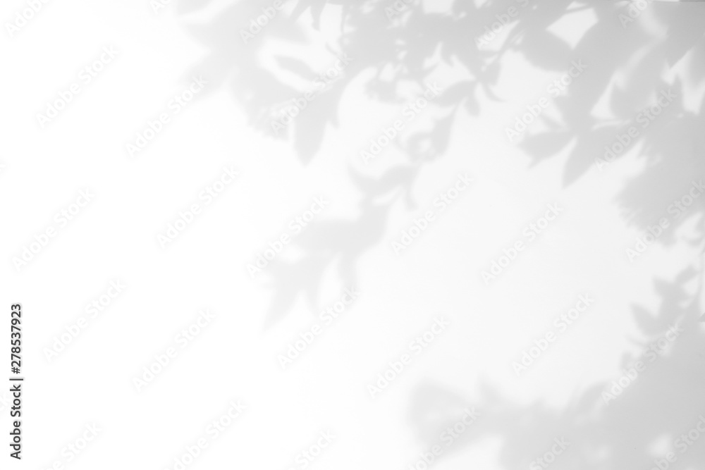 Fototapety, obrazy: Gray shadow of the leaves on a white wall. Abstract neutral nature concept background. Space for text.