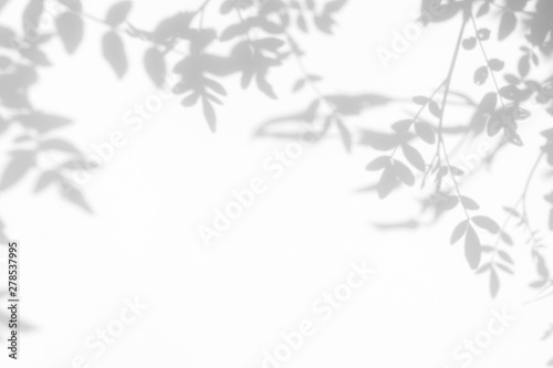 Obraz Gray shadow of the leaves on a white wall. Abstract neutral nature concept background. Space for text. - fototapety do salonu