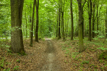 A Beaten Path Through A Green ...