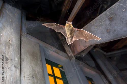 Fotomural  Pipistrelle bat flying inside building