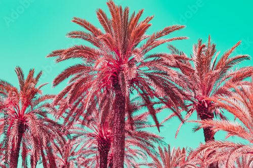 Stampa su Tela Light pink palm trees in infrared style