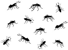 Ant. Vector Drawing