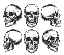 Human Skulls Collection