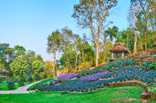 The Flower Beds On The Hill, Mae Fah Luang Arboretum, Doi Chang Moob, Thailand