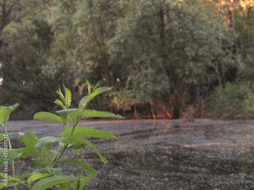 A boggy little dark forest lake with mud, green coastal bushes and a bright green branch with leaves Canvas Print