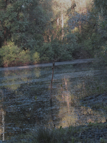 Photo A boggy little dark mysterious forest lake with muddy water and mud, green coastal bushes