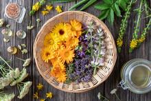 Fresh Medicinal Plants And Ess...