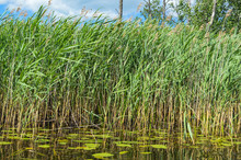 High Aquatic Green Natural Bea...