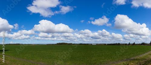 Fotografia beautiful meadows north of Esbjerg, Jutland, Denmark