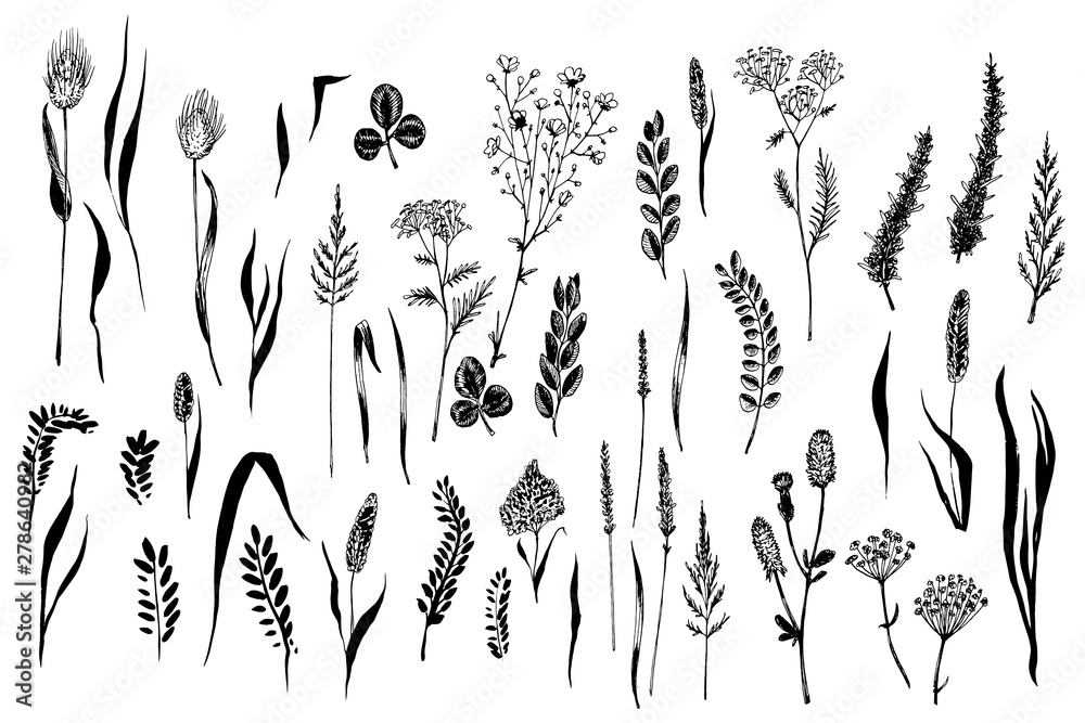 Fototapety, obrazy: Wild herbs and flowers painted black line.