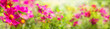canvas print picture - Sommer Blumen Wiese  -  Panorama