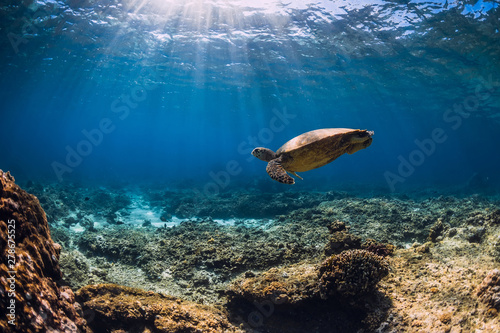 Keuken foto achterwand Schildpad Big turtle over coral bottom in blue ocean. Sea animal