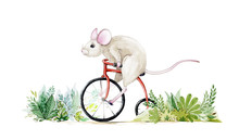 Cute Little Mouse Riding A Bike Through The Bushes Watercolor Illustration. Hand Drawn Water Colour Art Of A Rat, Isolated On White Background. Perfect For Greeting Cards, Trendy Prints