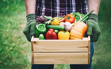 Farmer Holds In His Hands A Wooden Box With A Vegetables Produce On The Green Background. Fresh And Organic Food.
