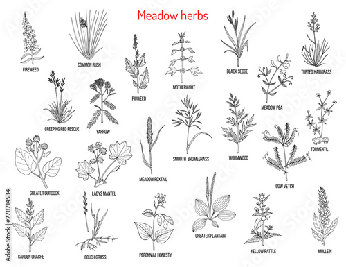 Fotografie, Tablou Wild meadow herbs and grasses