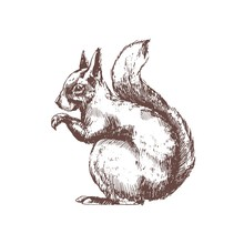 Tree Squirrel Hand Drawn With ...