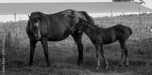 mare and foal mother and baby horse