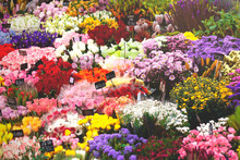 Colorful Other Flowers At The Entry To Flower Shop. Many Bouquet Of Flowers Arranged In The Flower Shop. Many Bouquet Flowers And Tag Price.