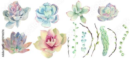 Fototapeta Set of watercolor succulents obraz