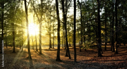 Broad leaf trees forest at autumn / fall sunlight Fototapeta