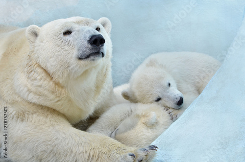 Deurstickers Ijsbeer Polar bear with cubs.
