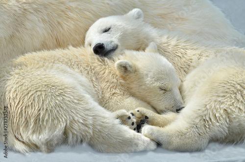Recess Fitting Polar bear polar bear