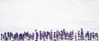 Lavender flowers border on white background. Copy space, top view. Summer background. Copy space, banner