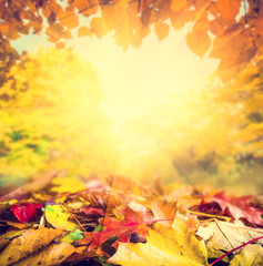 Autumn frame background, colourful leaves