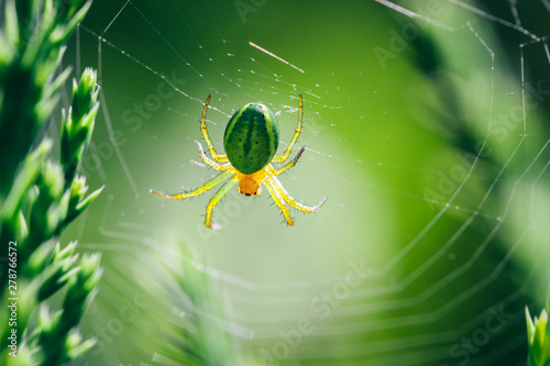 Poster de jardin Route Spider on its web between green plants in the garden.