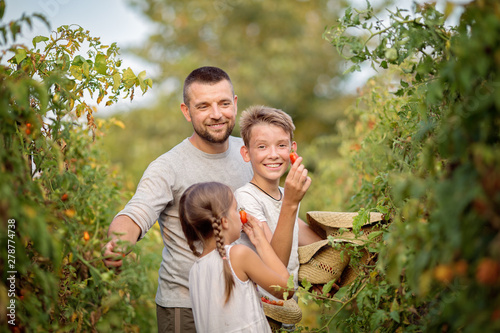 The family is picking tomatoes in the garden Wallpaper Mural
