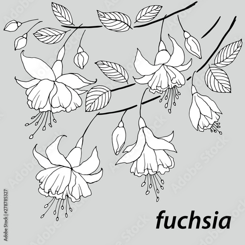 graphic drawing of flowers and branches of fuchsia Wallpaper Mural