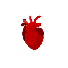 Creative Medicine Concept. Anatomical Human Heart Cartoon Design Icon In Flat Style Isolated Vector Illustration