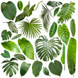 canvas print picture - More beautiful exotic tropical leaves, isolated leaf background
