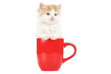 Cute Kitten In Red Cup Isolated On White Background