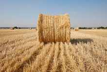 Agriculture Filed With Round Hay Bales After Wheat Harvest