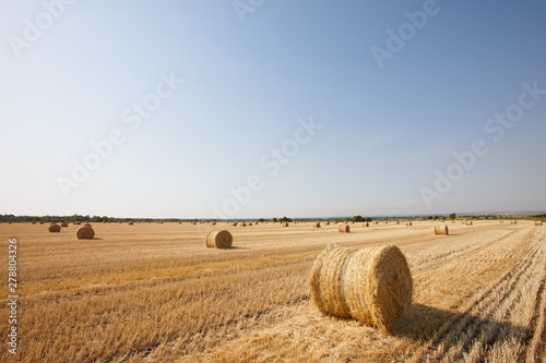 Fotografia, Obraz Agriculture filed with round hay bales after wheat harvest