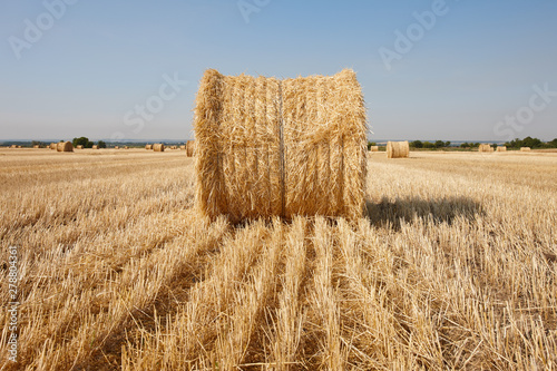 Fotografia Agriculture filed with round hay bales after wheat harvest