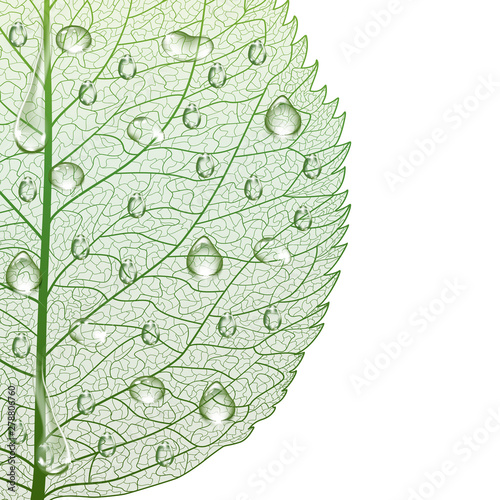 background-texture-leaf-with-drops-of-water-vector-illustration