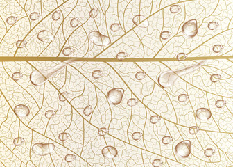 Background texture leaf with drops of water. Vector illustration.